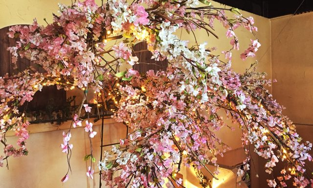 桜開花!今週末はひな祭り企画開催!!